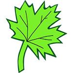 eikenblad boomblad blaadje canadees blad bladeren naamslinger tekstslinger